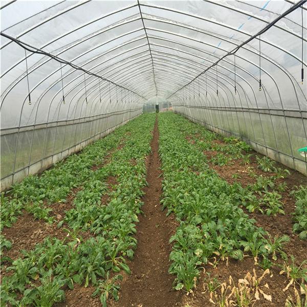 蔬菜大棚钢管