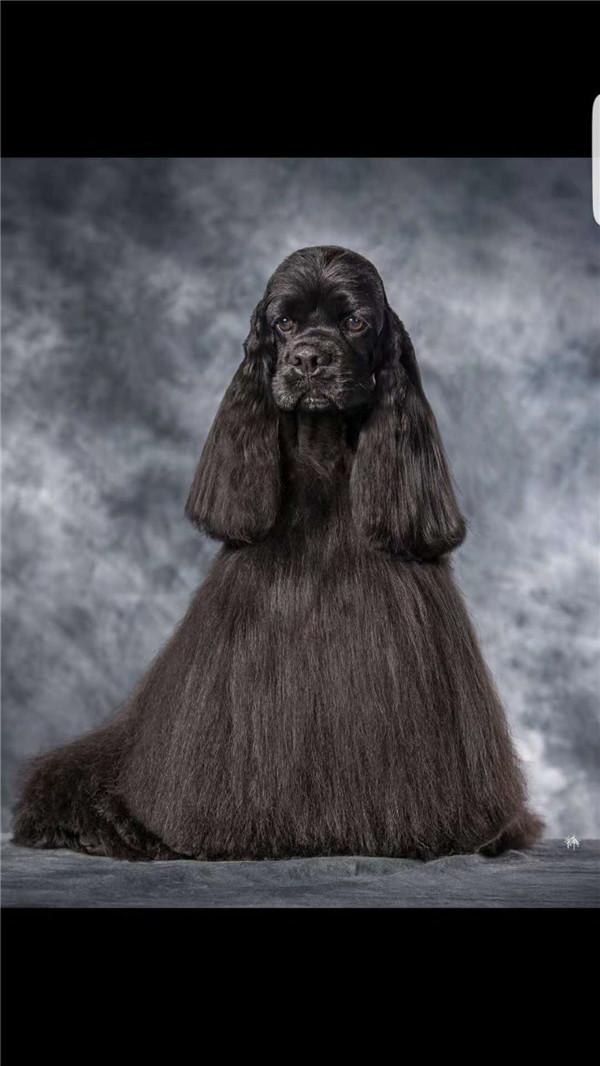 信誉好的宠物美容培训展示机构_上乘宠物美容培训展示