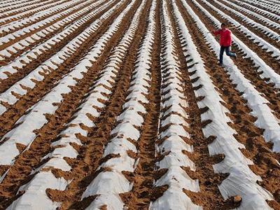 兰州地膜-兰州农用地膜-兰州环保地膜
