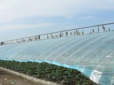 蘭州棚膜-蘭州農用棚膜
