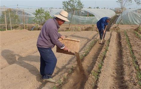 青海优良的有机菌肥生产基地 西宁果蔬专用肥