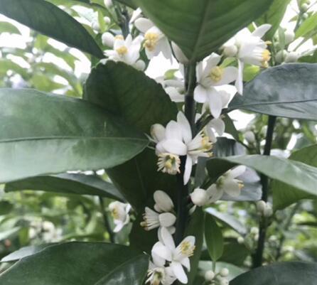 桂林花卉肥批发-桂林口碑好的花卉肥商家推荐