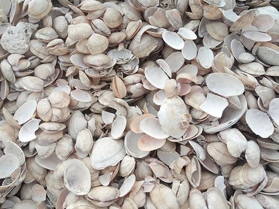 辽宁饲料贝壳粉-哪里有提供口碑好的饲料贝壳粉