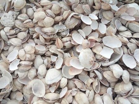 辽宁饲料贝壳粉墙面如何保养?