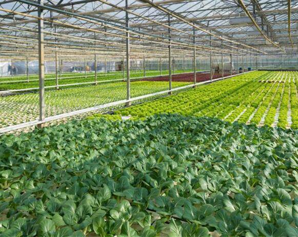 guangxi温室大棚公司-优良温室大棚选guangxi嘉丰long农业