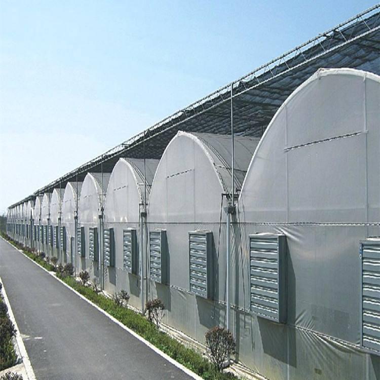 山西纹络式连栋温室-山东结实耐用的纹络式连栋温室