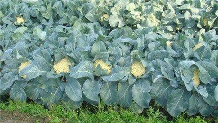 蔬菜配送资讯-杭州嘉缘农副产品供应具有口碑的蔬菜配送服务