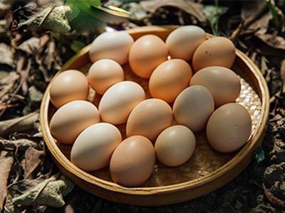 土鸡蛋价格-采购报价合理的土鸡蛋就找新星农业
