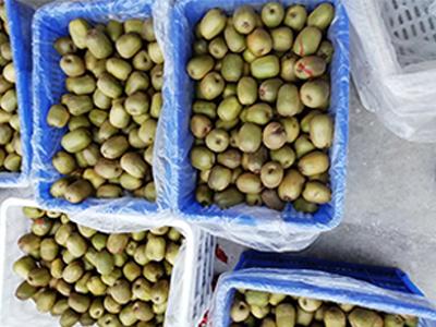 紅心獼猴桃廠家推廣|宜賓優良的紅心獼猴桃哪里有供應