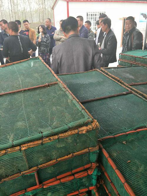 专业的小龙虾种苗批发商,当属江苏沭淮河农业,凉山哪里有小龙虾种苗