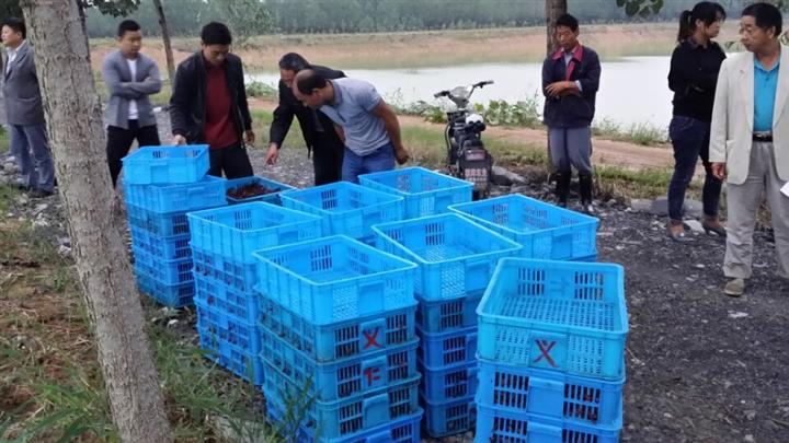 小龙虾种苗厂商出售|千耀农产品实惠的龙虾种苗
