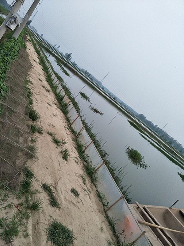 蓟县龙虾养殖哪里有|选购小龙虾种苗江苏沭淮河农业