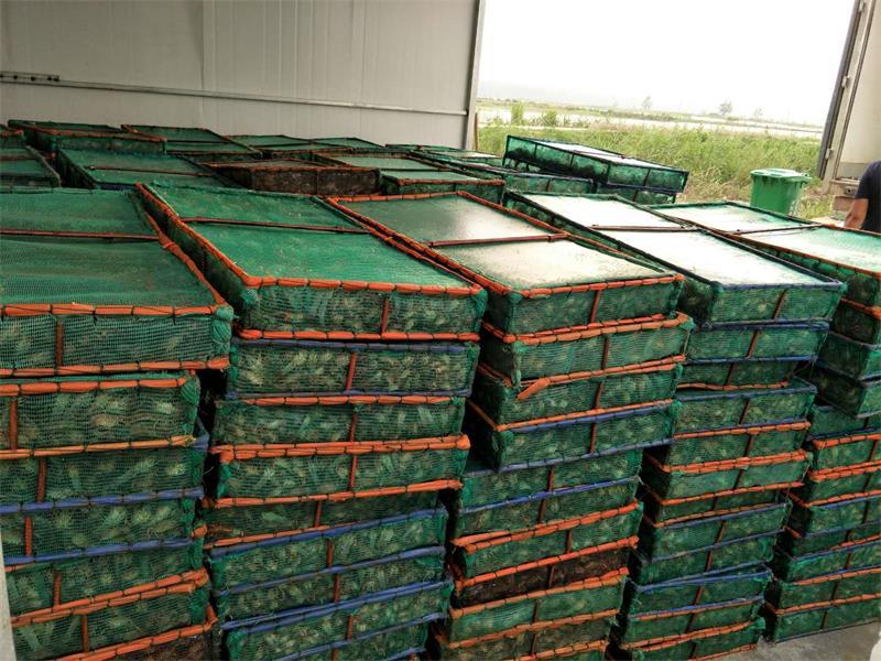 来江苏沭淮河农业,买划算的小龙虾种苗|南汇龙虾养殖哪里有
