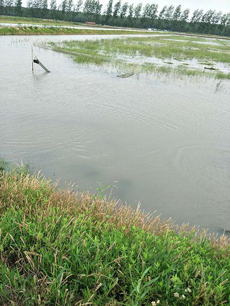 龙虾养殖价格如何_想买实惠的小龙虾种苗,就到江苏沭淮河农业