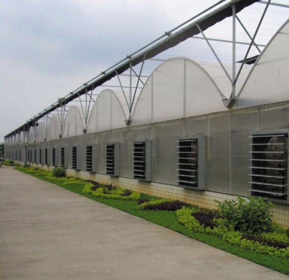 廣西連棟溫室大棚建設施工