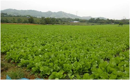 广西有机肥厂商-肥源有品质的茄果有机肥