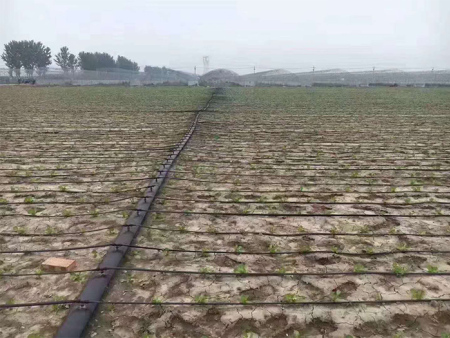 涇源迷宮滴灌帶|潤澤源節水科技供應專業的迷宮滴灌帶—潤澤源節水灌溉科技