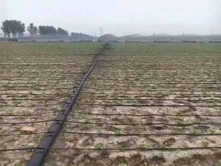 呼伦贝尔内镶滴灌带-耐用的内镶滴灌带—润泽源节水灌溉科技在哪可以买到