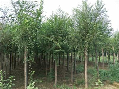 青海苗木生產