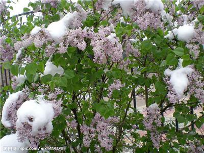 花灌木種植
