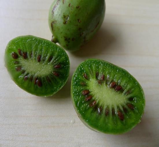 品质好的软枣猕猴桃推荐_软枣猕猴桃苗制造