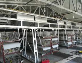 喂料机厂家-潍坊名声好的自动喂料机供应商推荐
