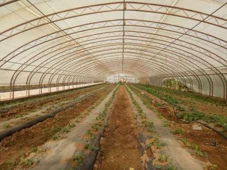 沈阳保温大棚膜哪家好?就选光源农业科技-质量可靠