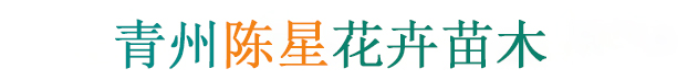 青州陈星花卉苗木