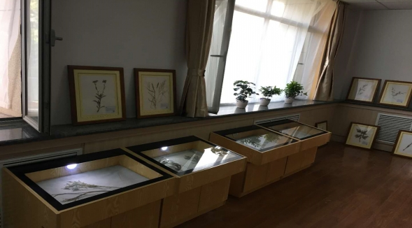 植物标本厂家-呼和浩特品质植物标本