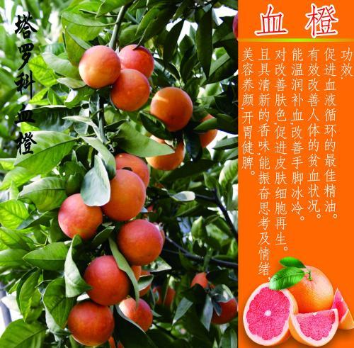 快捷的利贝土特产-在哪能买到价格划算的水果生鲜