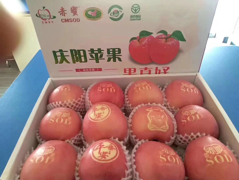 慶陽蘋果動態_上海市哪里供應的慶陽蘋果價格便宜