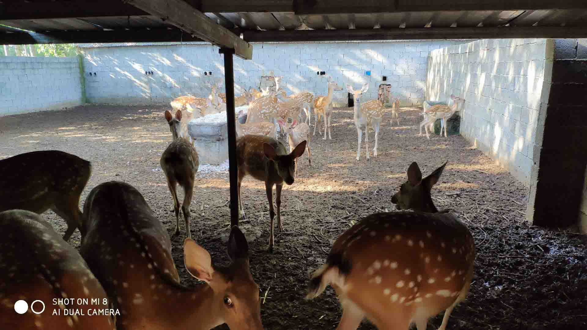 临沂优惠的梅花鹿养殖供应-梅花鹿养殖哪家好