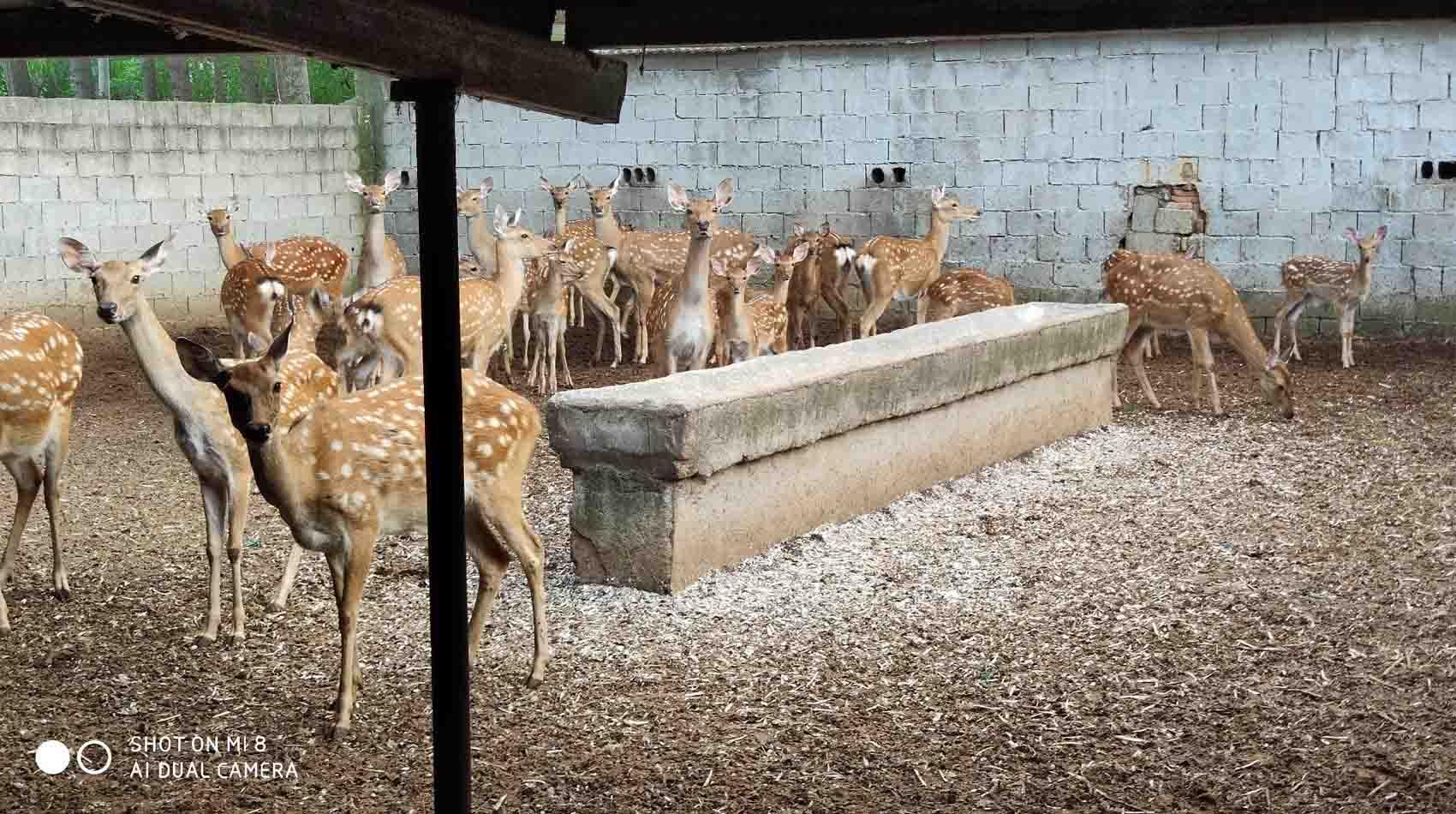 蒙阴哪里有养鹿的,优惠的梅花鹿养殖临沂哪里有