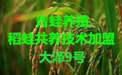 江苏好的稻蛙共养技术【江苏大泽生态科技】免费培训基地