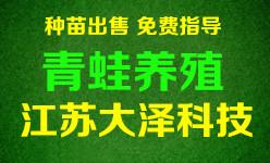青蛙养殖,稻蛙共养技术免费培训【江苏大泽科技】基地