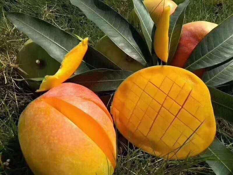 阿拉善盟水果批发_内蒙古有保障的水果项目招商以及代理哪家公司提供