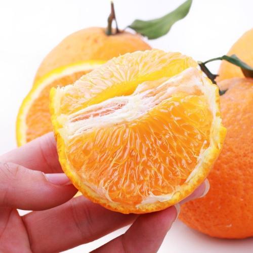 眉山不知火價格范圍|眉山劃算的橘子批發