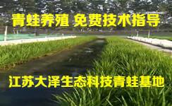 黑斑蛙卵苗供应基地【江苏大泽生态科技】现金回收成品蛙