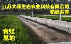 专业青蛙养殖技术【江苏大泽生态科技】十几年养殖经验