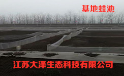哪里有专业的青蛙养殖,稻蛙混养技术【江苏大泽科技】公司