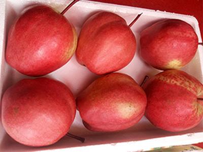 红酥梨批发-哪里有供应红梨