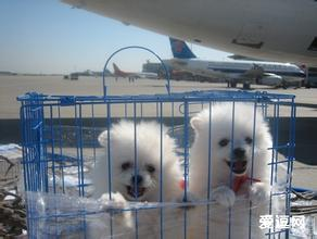 普陀区宠物托运认准华宇物流公司 免费上门取宠物