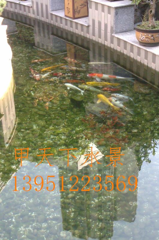 上海市锦鲤鱼池水专业处理。国家专利技术!