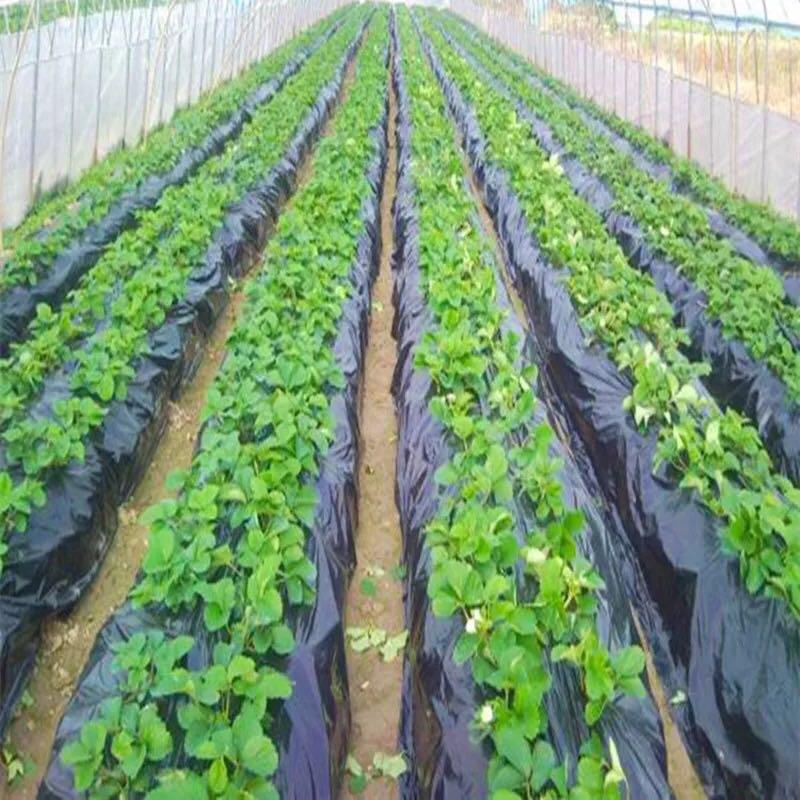 广西地膜生产厂家,草莓种植地膜批发