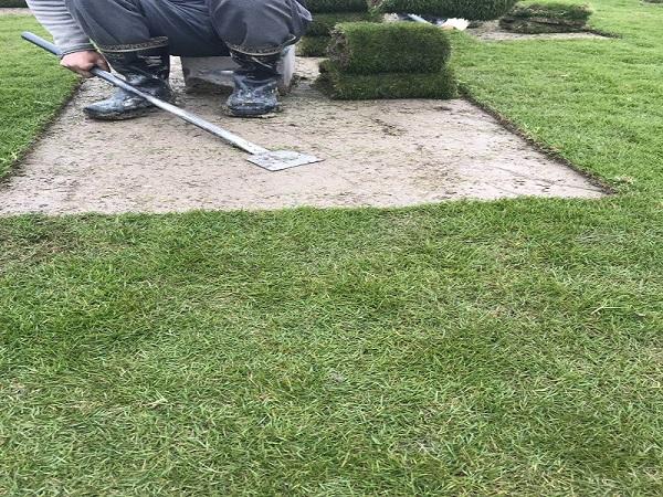 台湾草皮多少钱_供应湖南抢手的台湾草皮