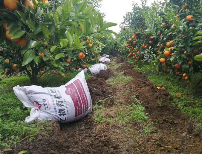 南宁柑橘有机肥厂家|价格实惠的柑橘有机肥南宁哪里有