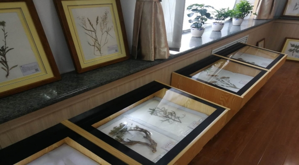 长白山科学考察_呼和浩特市达文文化传播专业供应植物标本