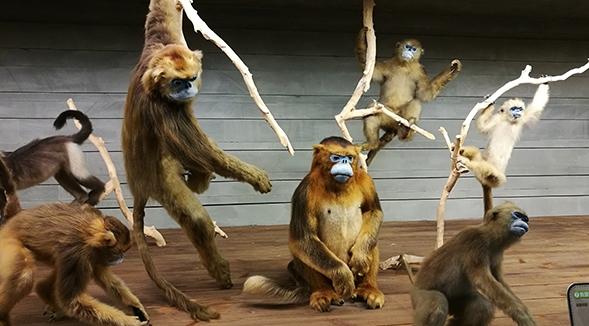 达尔文博物教学专业产供动物标本,欢迎新老客户咨询