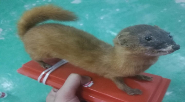 湖北動物標本供應商-如何選購好用的動物標本