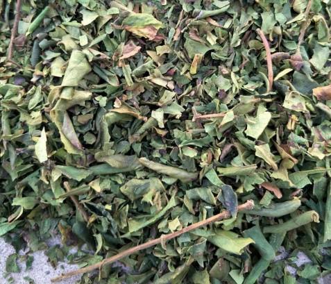 金银花叶子金银花下脚料提取用叶子库存-山东有品质的金银花叶子生产基地